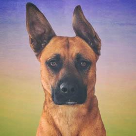 Portrait of a rescue dog