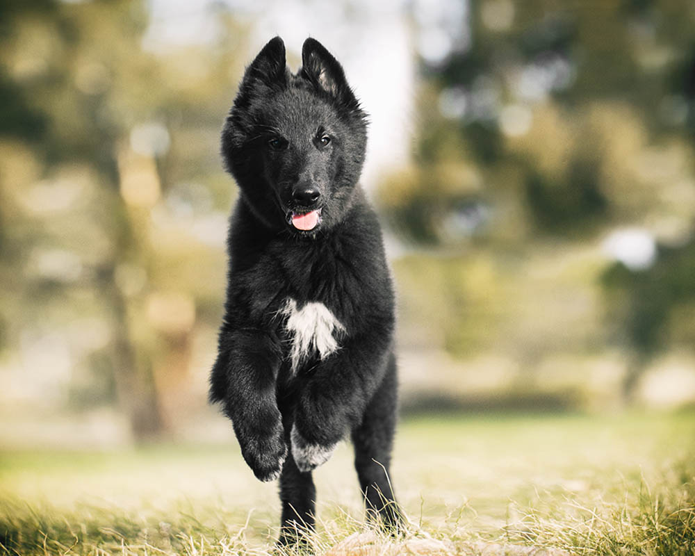 Home Dog Training Prices
